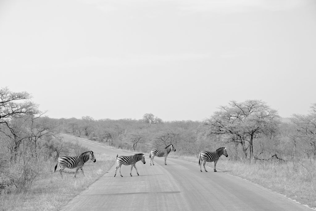 A real life zebra crossing
